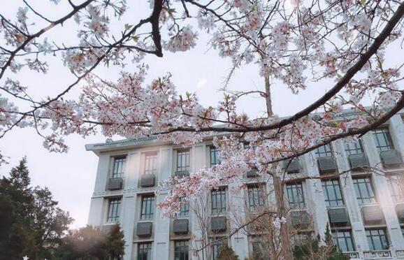 樱花季刷爆朋友圈,三招教你直出浪漫樱花自拍写真!