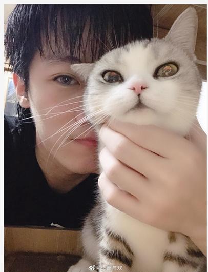 猫咪吐舌头是生病了吗?来看看抖音主播东门魏官人的解答吧!