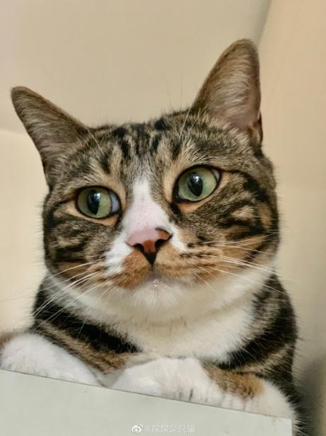 抖音主播尿尿是只猫携爱宠开吃播,粉丝:我看猫吃饭看入迷